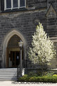 Entrance And Flowering Tree Infront Of Church